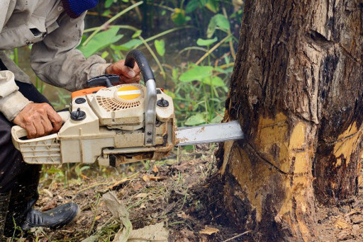 Root & Stump Removal And Other Tree Services Rothwell