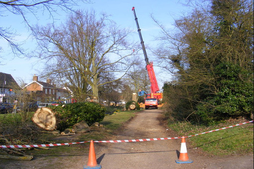 Tree Surgeon Bank Top Based Business Providing Tree Surgery And Other Tree Work