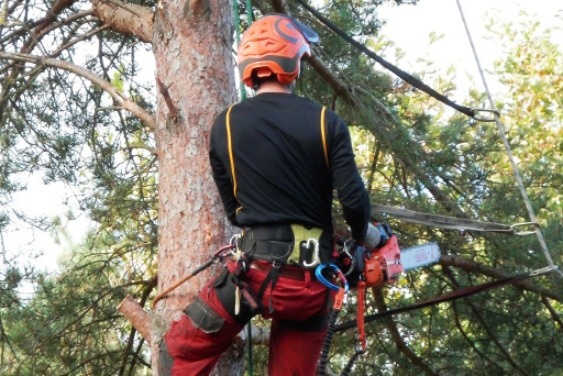 Tree Surgeon Akroydon Providing Tree & Stump Removal Tree Surgery And Other Tree Services