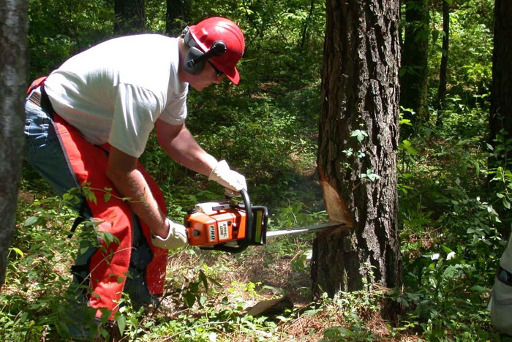 24-Hr Emergency Tree Services Sheffield Tree & Stump Removal