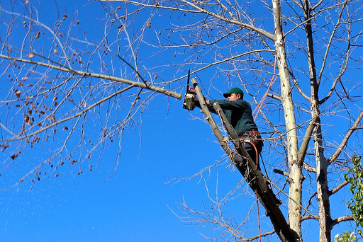Expert Tree Surgeon - Tree Trimming Services All Over The Oakdale Area