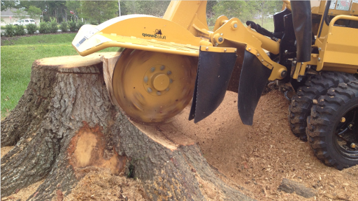 our biggest stump grinding machine ripping through a big oak tree stump